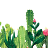 sabra_cactus_speaking_hebrew